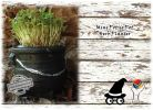 Easter Decorations Potjie Pots Herbs Microgreens